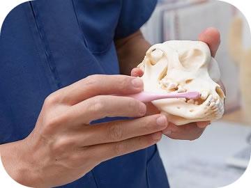 動物の骨格